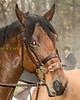 Sewickley Hunt Oct 2012-214