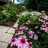 Wilpen Hall Gardens 2015-5