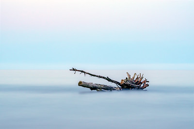 Stranded tree in the Adriatic Sea