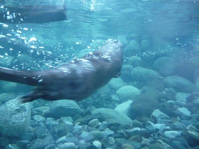 Harbor Seal Alaska Zoo