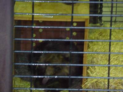 Bear Cub in Cage
