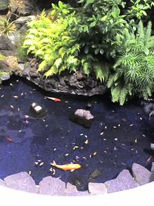 Hotel Koi Pond