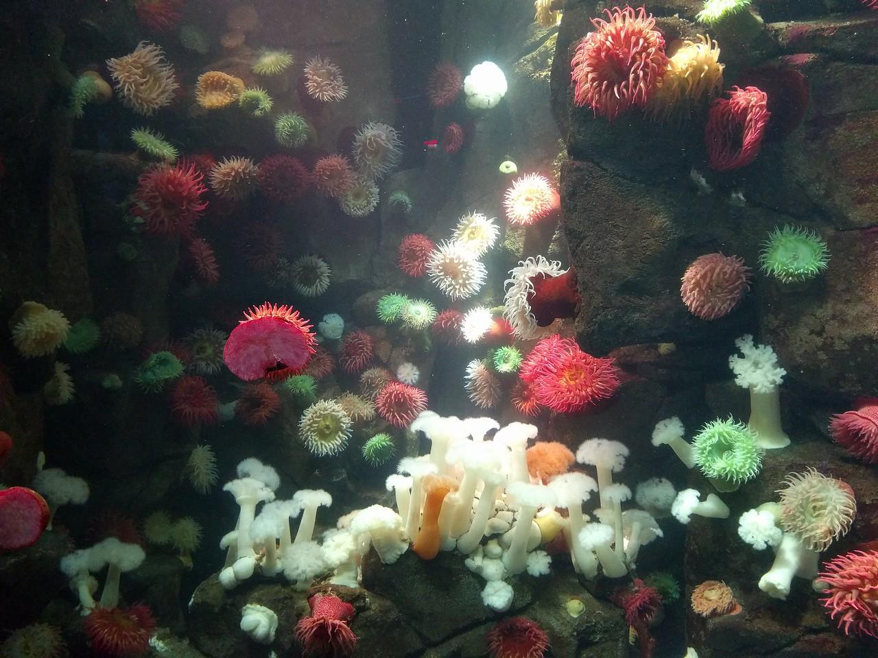033 - Toronto - Aquarium - Sea Anemones