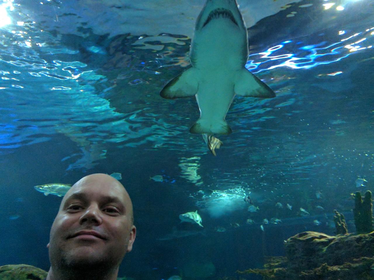 038 - Toronto - Aquarium - It's Right Behind Me, Isn't It
