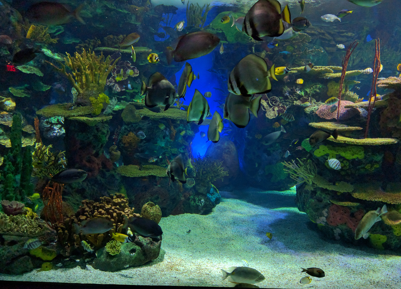 034 - Toronto - Aquarium - Rainbow Reef 1