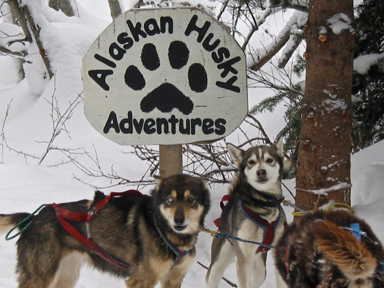 Sun Peaks is a multi-activity resort, so there's more to do that just ski….for example, you can go dog sledding.