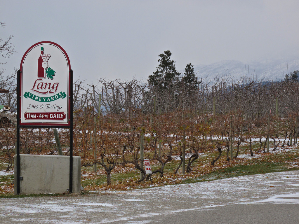 The vineyards look very different in the winter months.