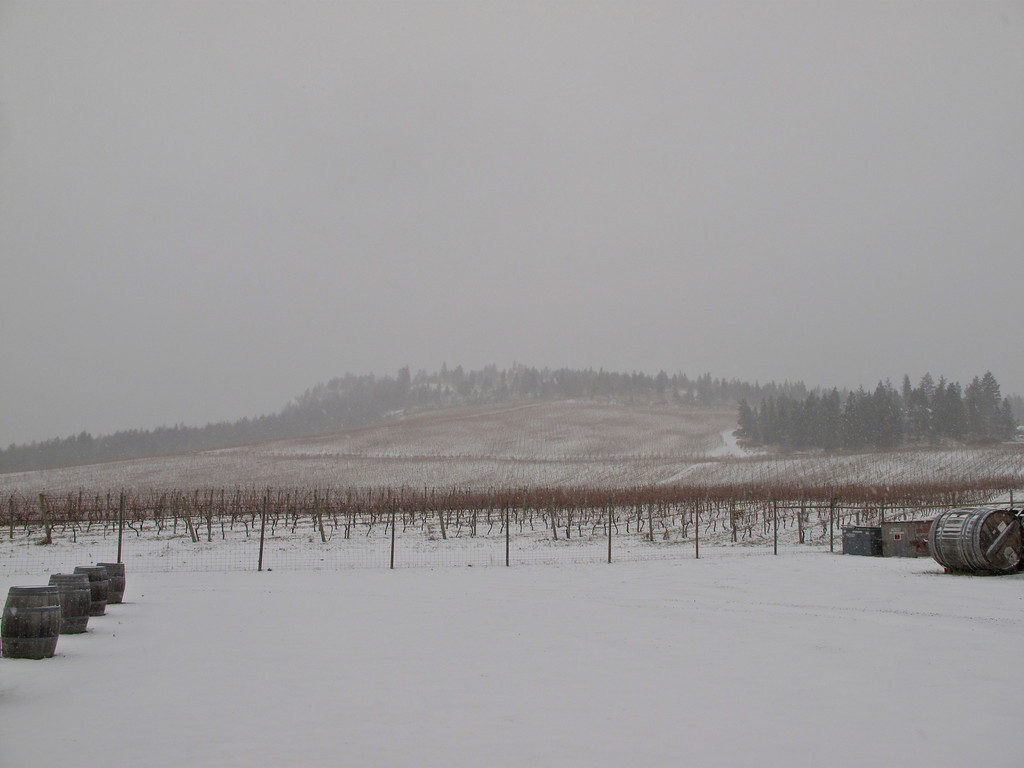 The vineyards have a very different look during the winter months.