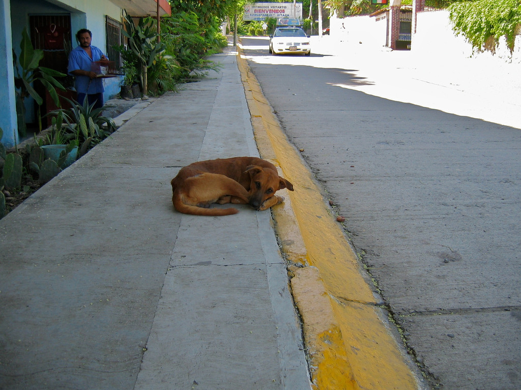 A dog takes a rest in the shade from the hot summer sun in downtown Zihuatanejo.