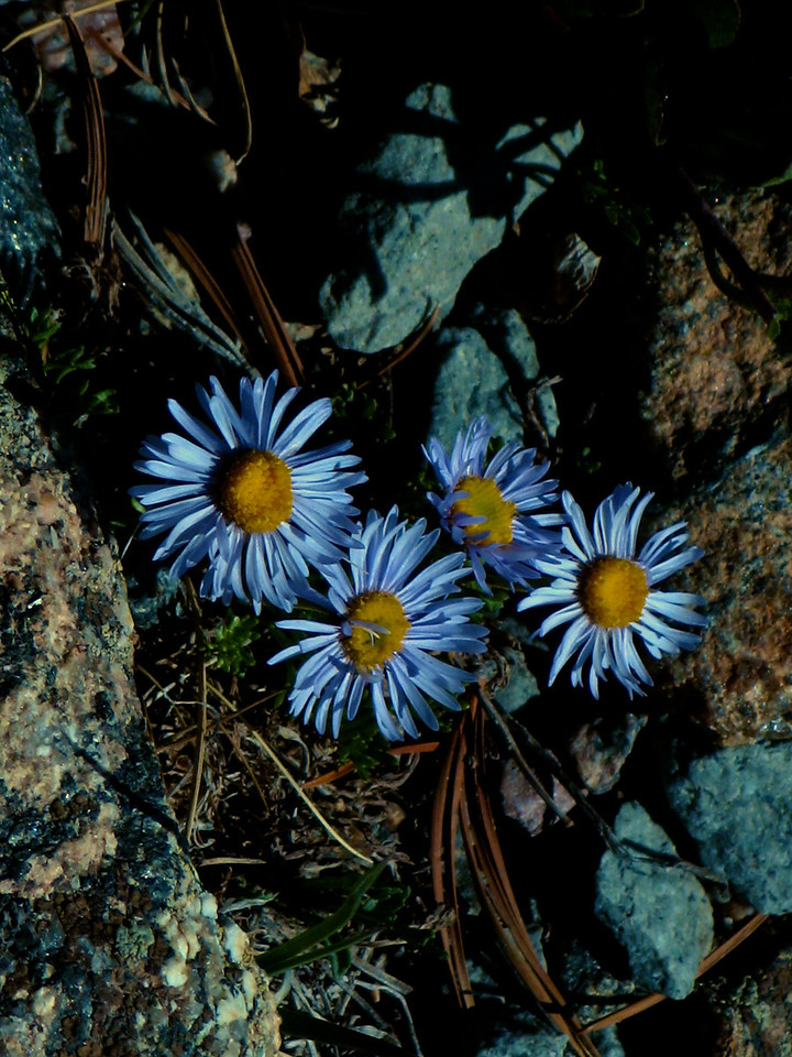 The trail winds through a lot of alpine tundra, so you'll see lots of flowers and plants.