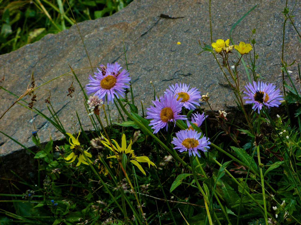 If you hike the trail at the right time of year, there's always wild flowers along the way.