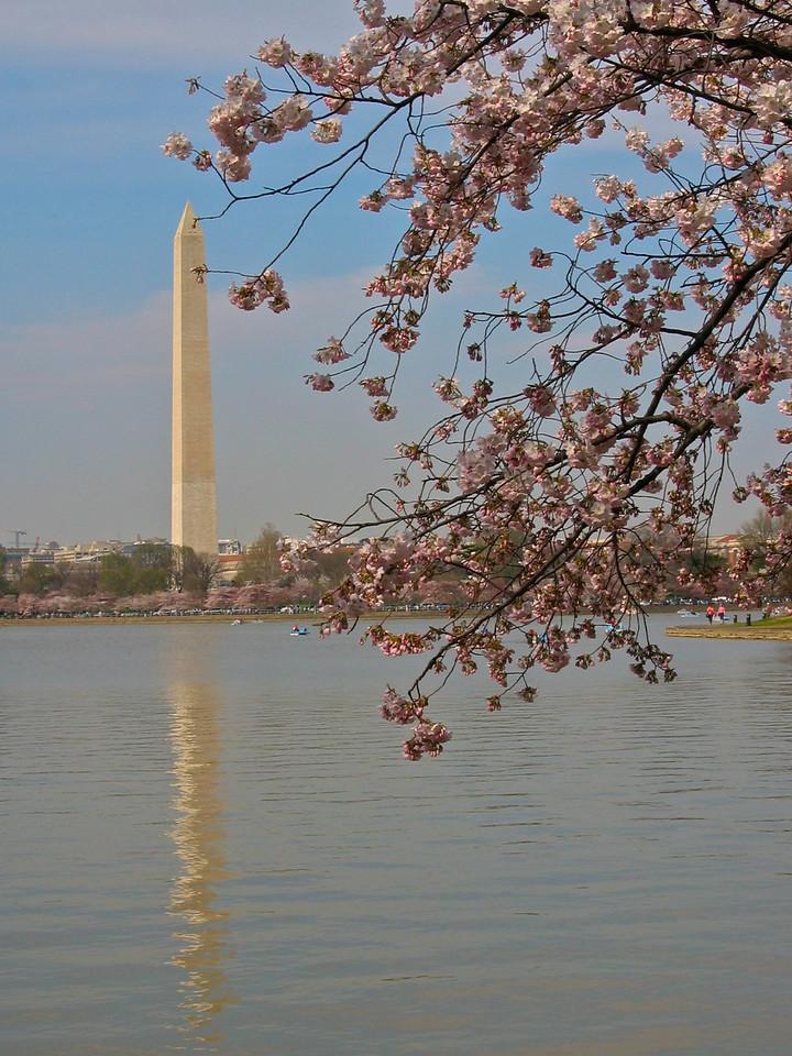Wasington Memorial as seen from the Jefferson Memorial.