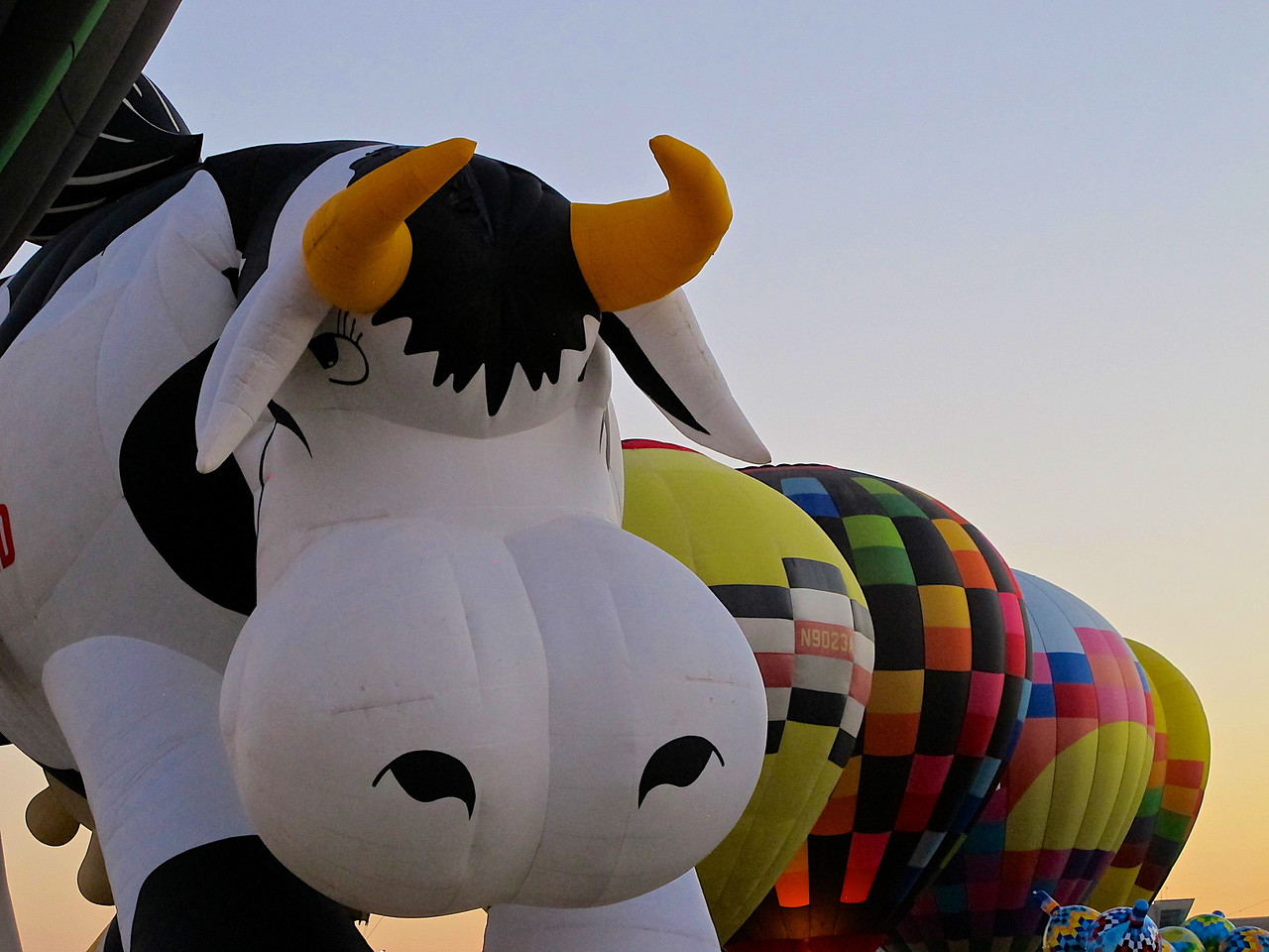 This is Airabelle, the Creamland cow.
