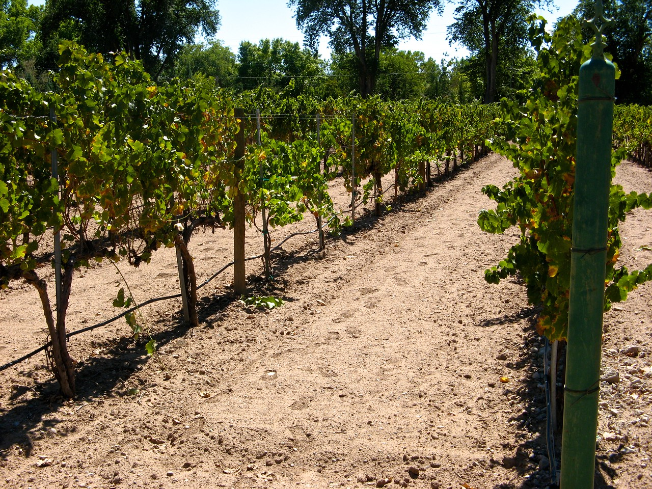 Casa Rodena grows both red and white grapes.