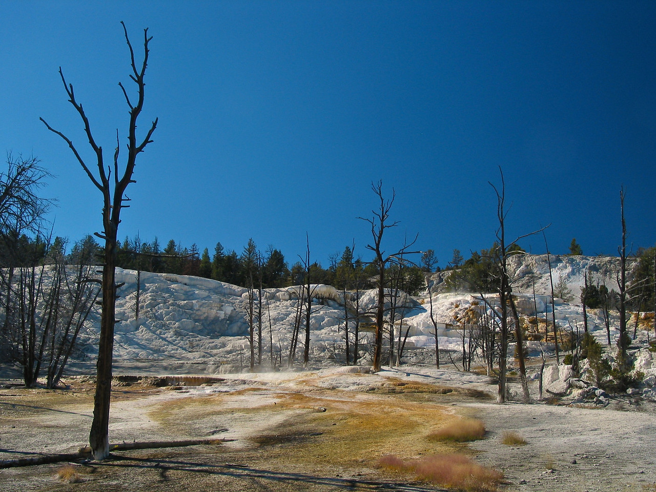 Mammoth Hot Springs is a large complex of hot springs on a hill of travertine in Yellowstone National Park adjacent to Fort Yellowstone and the Mammoth Hot Springs Historic District.[