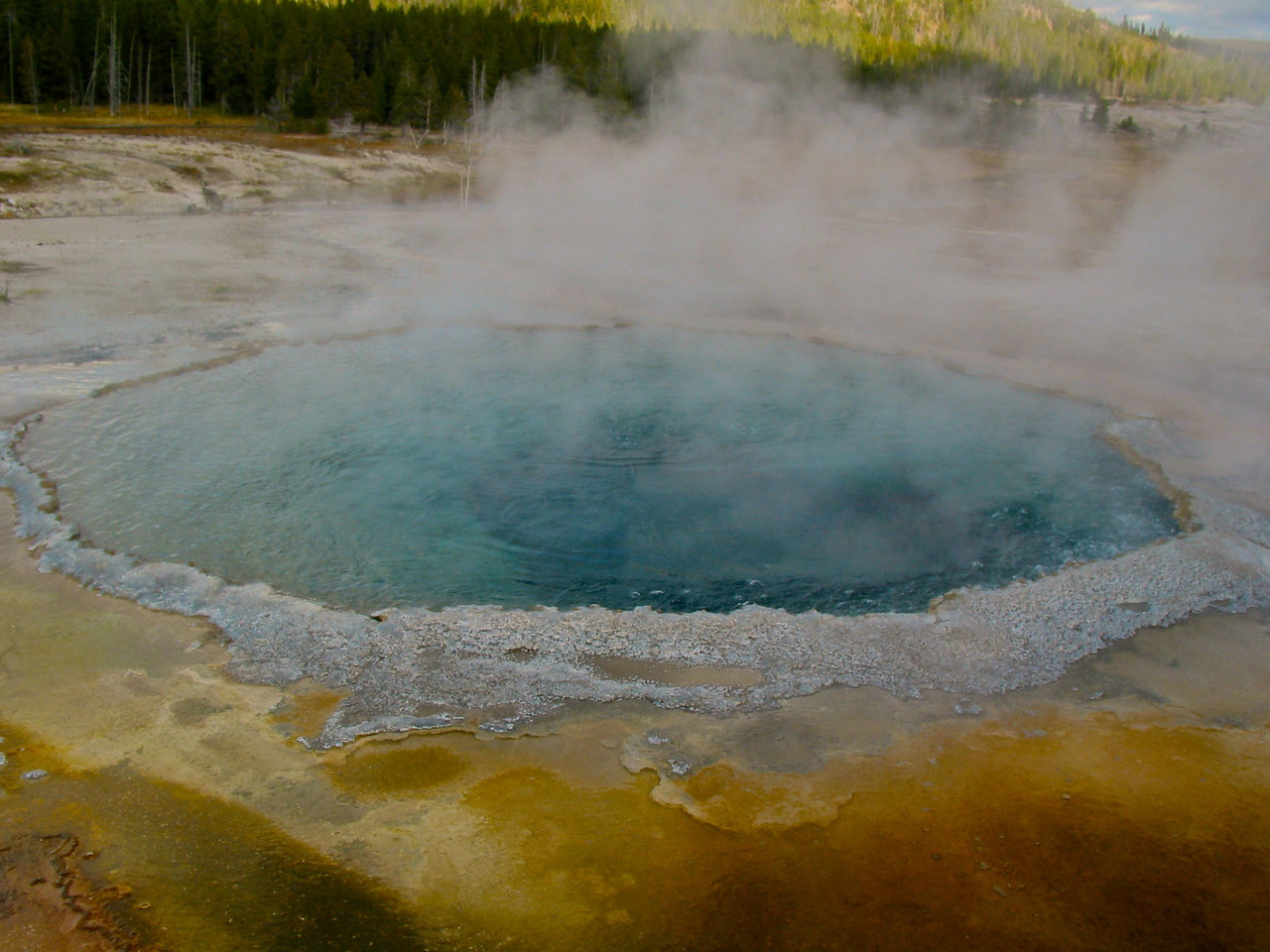 There are 300 geysers in Yellowstone and a total of at least 10,000 geothermal features altogether. Half the geothermal features and two-thirds of the world's geysers are concentrated in Yellowstone.