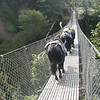 Majority of bridges in Khumbu Valley are suspension bridges