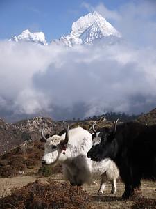 Yaks Thamserku (6.608 m) is visible behind.