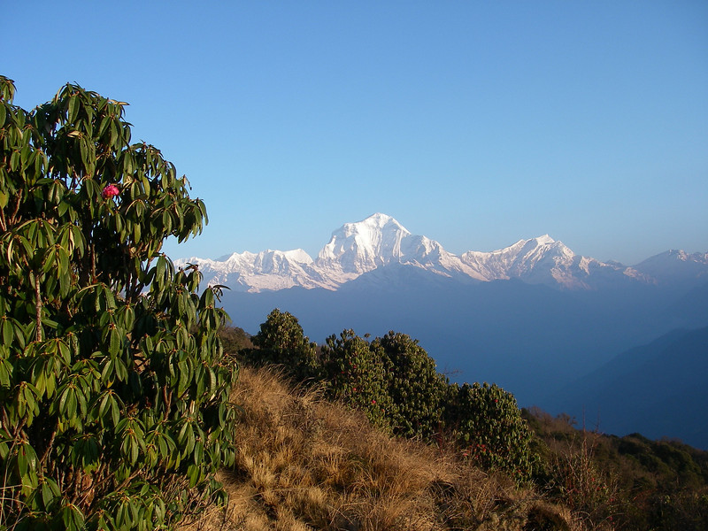 Dhaulagiri (8.167m = 26,795ft) from Poon Hill 4