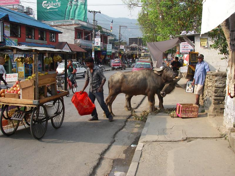 Pokhara (827m = 2,713ft) 1