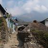 Annapurna Region - Ghorepani 2