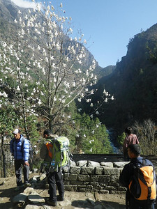 April is a spring time in Solu Khumbu Valley.