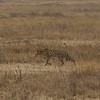 Ngorongoro crater conservation area - 3
