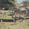 Lake Manyara National Park - 4