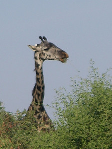 Lake Manyara National Park - 3