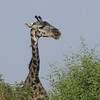 Lake Manyara National Park - 3