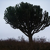 Interesting tree-cactus
