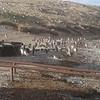 Magdalena Island Penguins-1