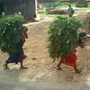 Hard working Nepali women. Panchkal, Nepal (6,234ft/1.900m).