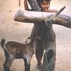 Nepalese kid 1