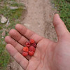 We went downstream to about 8,000ft or 2.438m and from there hiked up Needle Creek.<br /> On our way we found testy raspberries.