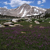 Cirque Peak (12900 ft / 3932 m) with flowers carpet