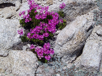 More flowers around the summit.