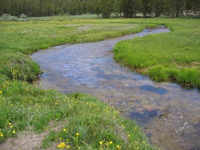 Creek at Golden Trout Camp