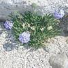 Flowers on the summit
