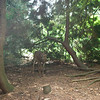 Lithia Park - wildlife