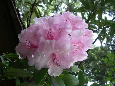 Lithia Park - flowers 2