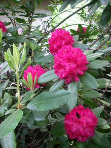 Lithia Park - flowers 1