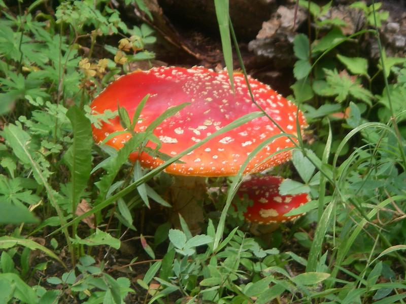 Impressive mushroom