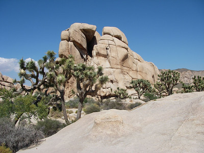 Visiting Joshua Tree National Park