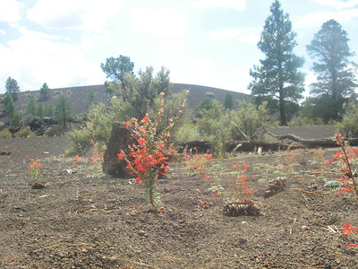 Sunset Crater Volcano, just a few miles from the Park entrance…
