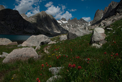 ... wildflowers (red ones are Indian Paintbrushes - State flower of Wyoming), ...