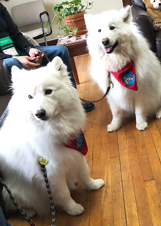 Therapy Dogs - Balto & Fiona, May 2018