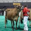NAILE-JrJersey-CowsDSCN8568