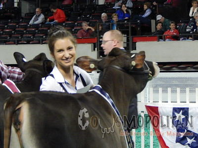 All-American Open Jersey Show 2015-Heifers