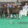 NAILE15-Open-Jersey-Hfr-IMG_0411